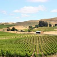 calistoga wineries