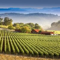 wine appellation