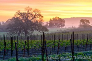 Where is Napa Valley Wine Country?