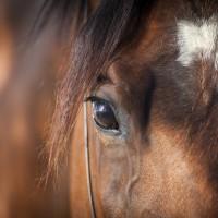 Napa Valley Horse Company