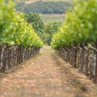 Visit a Napa Vineyard on Day Trips from Sacramento