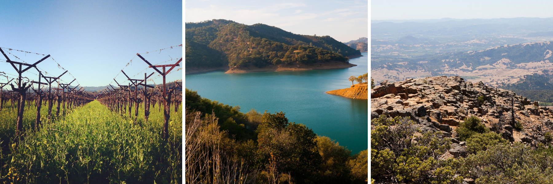 A vineyard, a lake, and the top of a mountain on Napa Hiking Trails