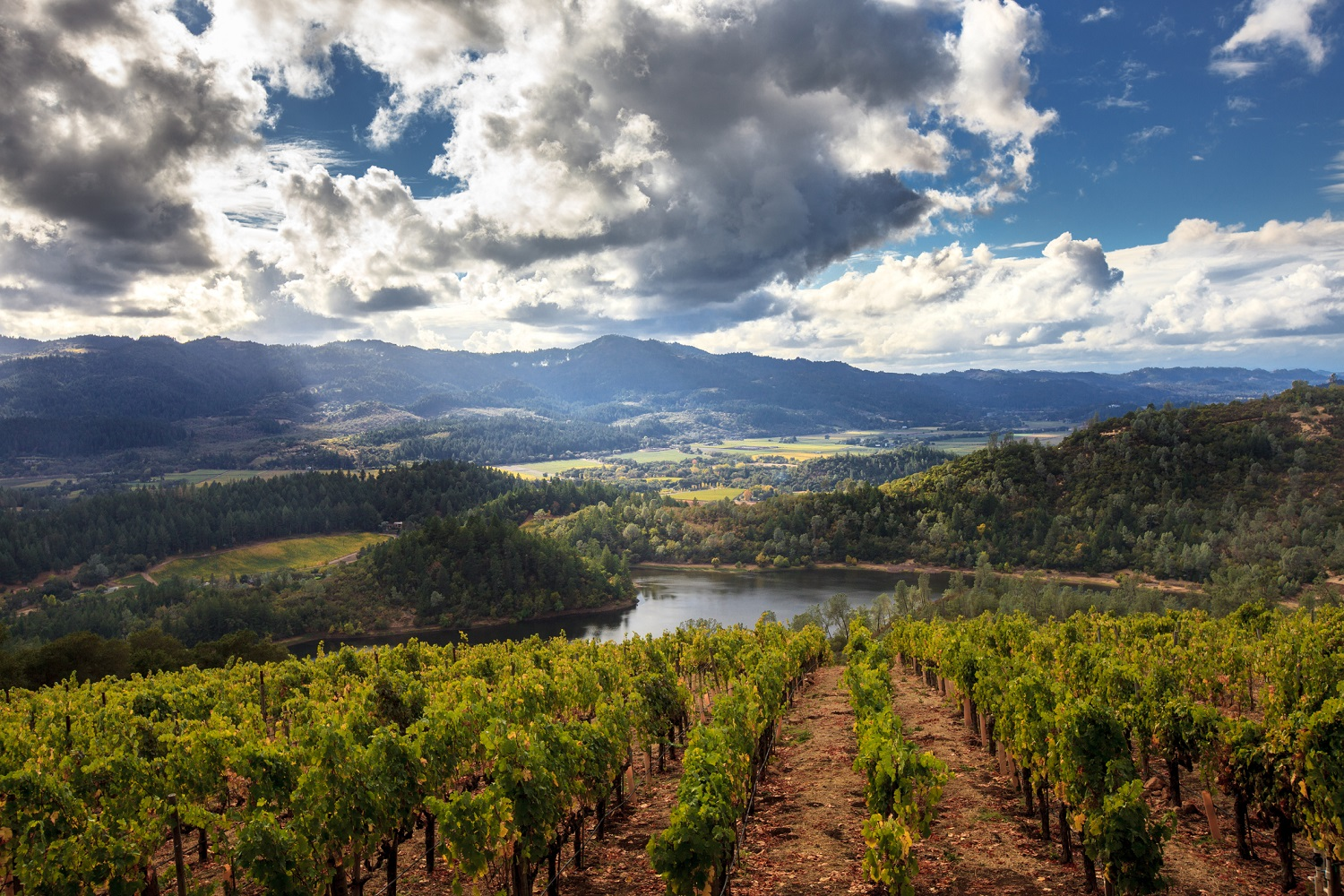 Learn About the Different Napa Valley Appellations