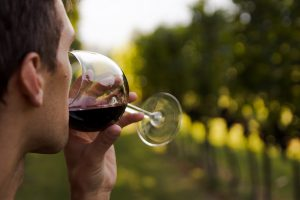 man drinking red wine from a glass in a vineyard